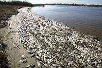 Luật không cho phép xả thải ngầm dưới đáy biển